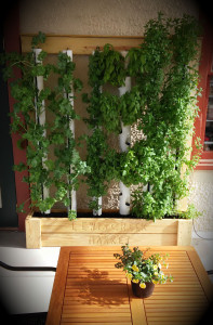Check out our newest installation: a vertical herb garden from Shiloka at Christian Creek Greenwalls.